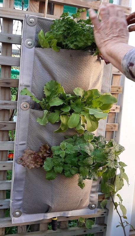 planting 4